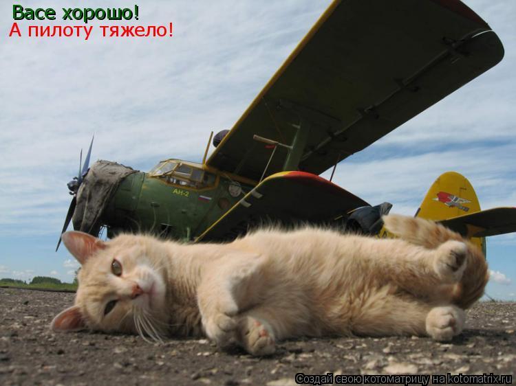 Котоматрица: Васе хорошо! А пилоту тяжело!