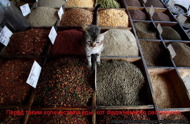 Котоматрица: Перед таким количеством еды, кот Федя немного растерялся.