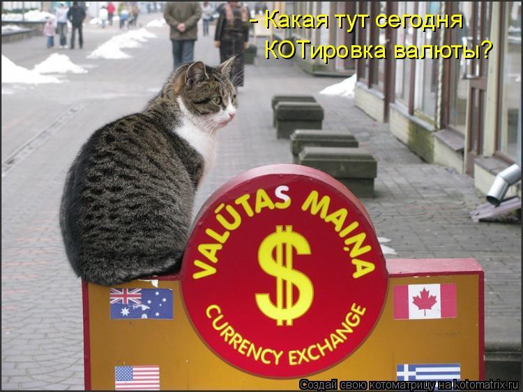 Котоматрица: - Какая тут сегодня КОТировка валюты?