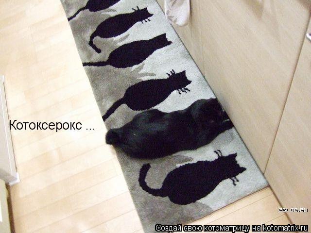 Котоматрица: Котоксерокс ...
