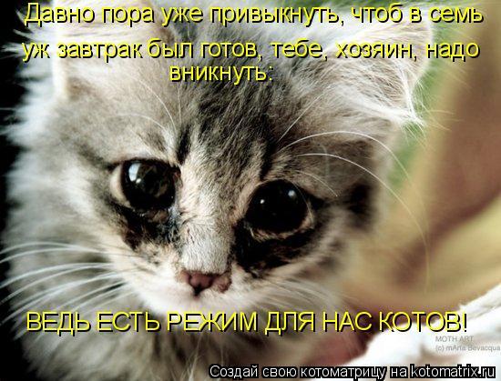 Котоматрица: Давно пора уже привыкнуть, чтоб в семь  уж завтрак был готов, тебе, хозяин, надо   вникнуть:  ВЕДЬ ЕСТЬ РЕЖИМ ДЛЯ НАС КОТОВ!