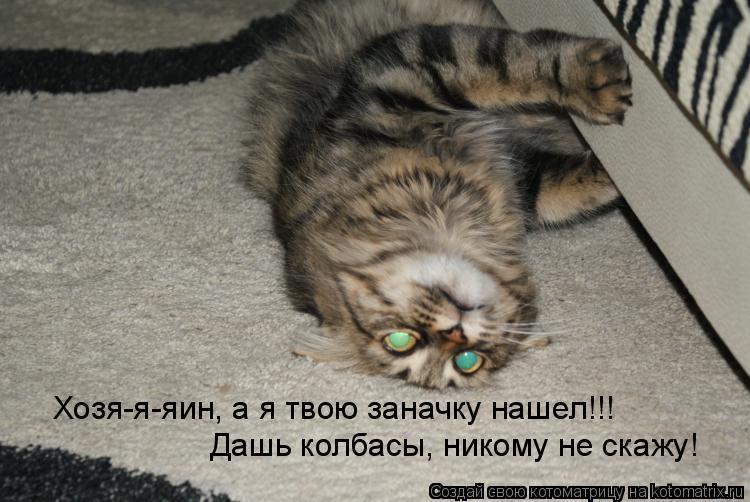 Котоматрица: Хозя-я-яин, а я твою заначку нашел!!! Дашь колбасы, никому не скажу!