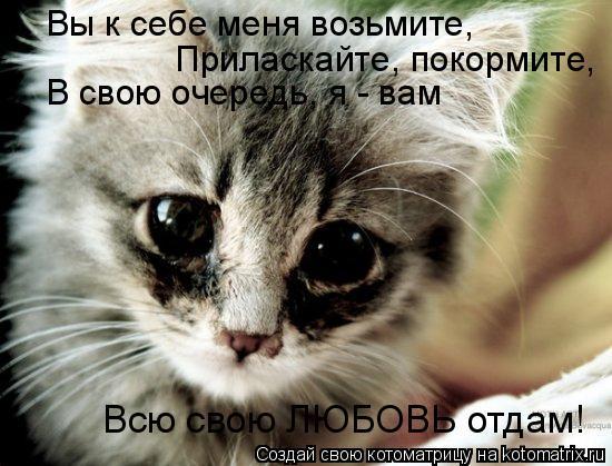 Котоматрица: Вы к себе меня возьмите, Приласкайте, покормите, В свою очередь, я - вам Всю свою ЛЮБОВЬ отдам!