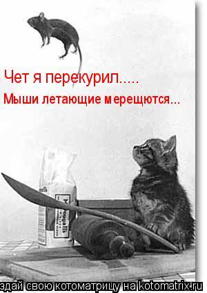 Котоматрица: Чет я перекурил..... Мыши летающие мерещются...