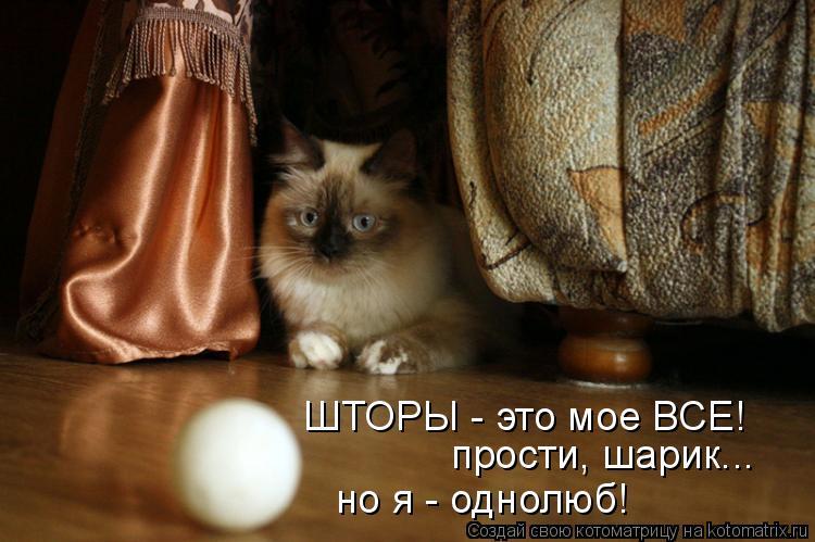 Котоматрица: прости, шарик... но я - однолюб! ШТОРЫ - это мое ВСЕ!