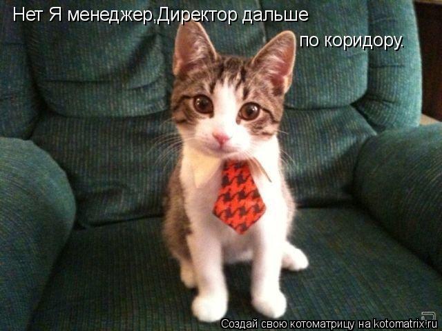 Котоматрица: Нет Я менеджер,Директор дальше по коридору.