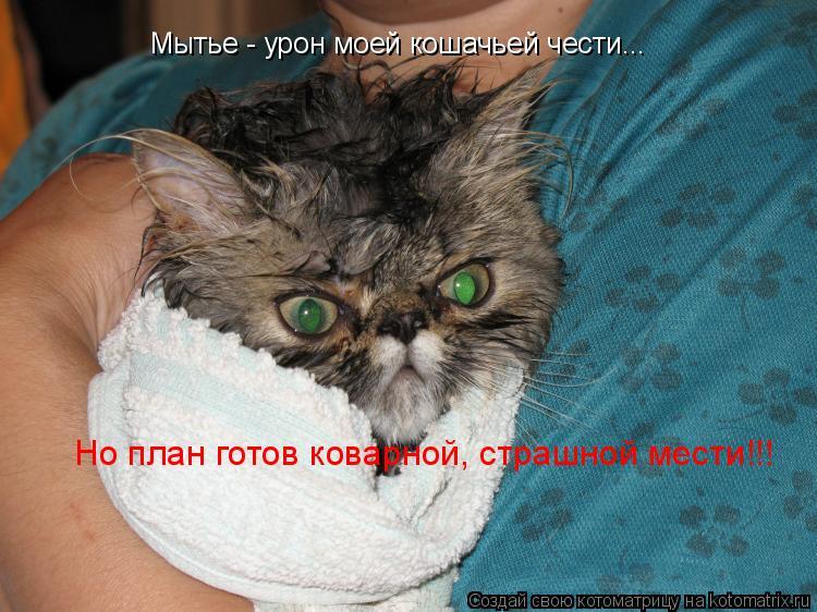 Котоматрица: Мытье - урон моей кошачьей чести... Но план готов коварной, страшной мести!!!
