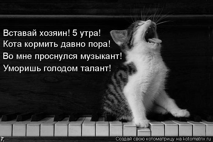 Котоматрица: Во мне проснулся музыкант! Уморишь голодом талант! Кота кормить давно пора! Вставай хозяин! 5 утра!