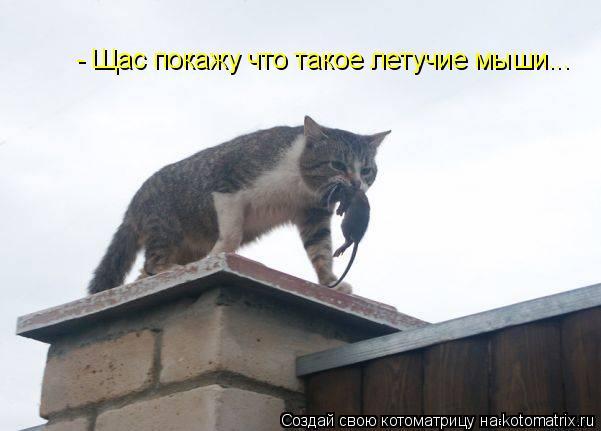 Котоматрица: - Щас покажу что такое летучие мыши...