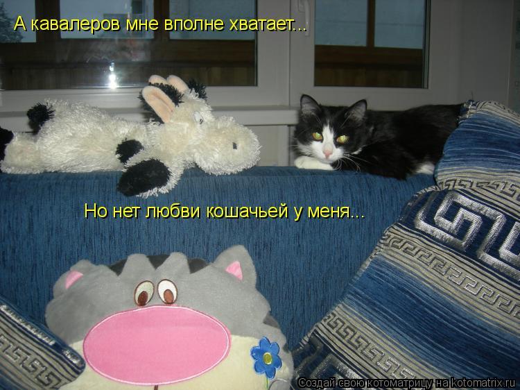 Котоматрица: А кавалеров мне вполне хватает... Но нет любви кошачьей у меня...