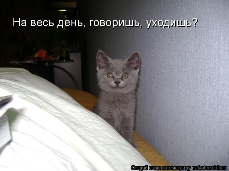 Котоматрица: На весь день, говоришь, уходишь?
