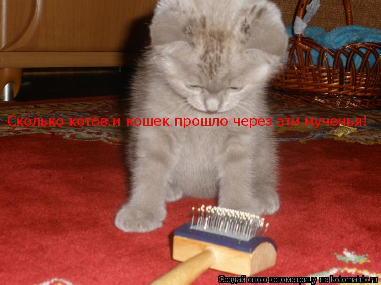 Котоматрица: Сколько котов и кошек прошло через эти мученья!