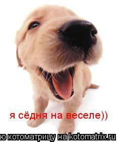 Котоматрица: я сёдня на веселе))