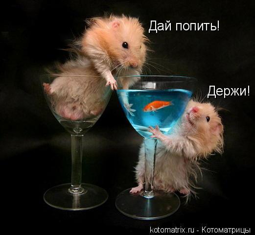 Котоматрица: Дай попить! Держи!