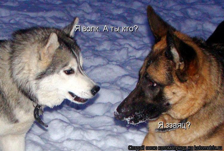 Котоматрица: Я волк. А ты кто? Я ззаяц?