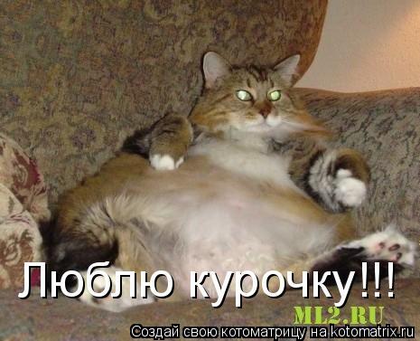 Котоматрица: Люблю курочку!!!