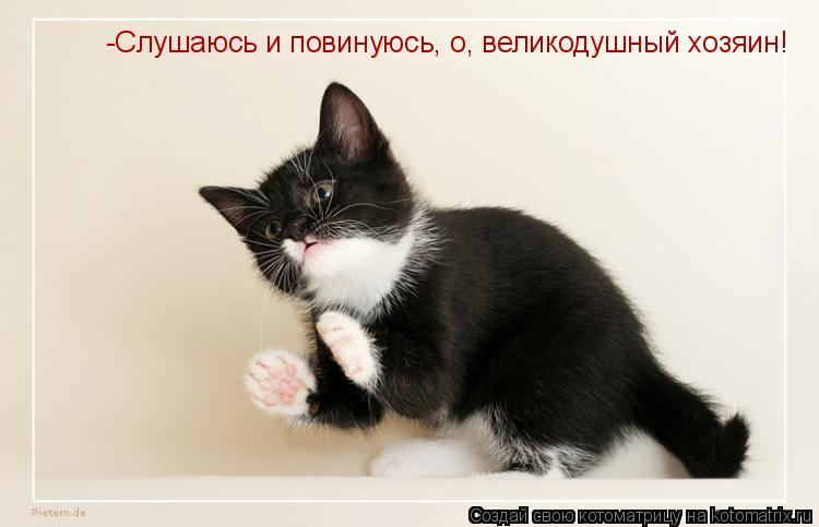 Котоматрица: -Слушаюсь и повинуюсь, о, великодушный хозяин!
