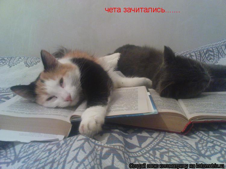 Котоматрица: чета зачитались.......