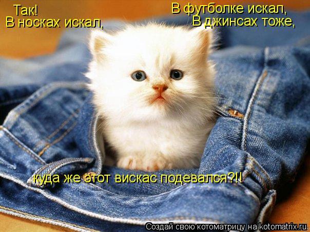 Котоматрица: Так! В носках искал, В футболке искал, В джинсах тоже, куда же этот вискас подевался?!!