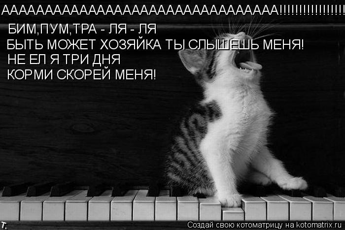 Котоматрица: АААААААААААААААААААААААААААААААА!!!!!!!!!!!!!!!!!!!!!!! БИМ,ПУМ,ТРА - ЛЯ - ЛЯ  БЫТЬ МОЖЕТ ХОЗЯЙКА ТЫ СЛЫШЕШЬ МЕНЯ! НЕ ЕЛ Я ТРИ ДНЯ КОРМИ СКОРЕЙ МЕНЯ!