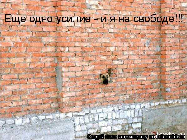 Котоматрица: Еще одно усилие - и я на свободе!!!