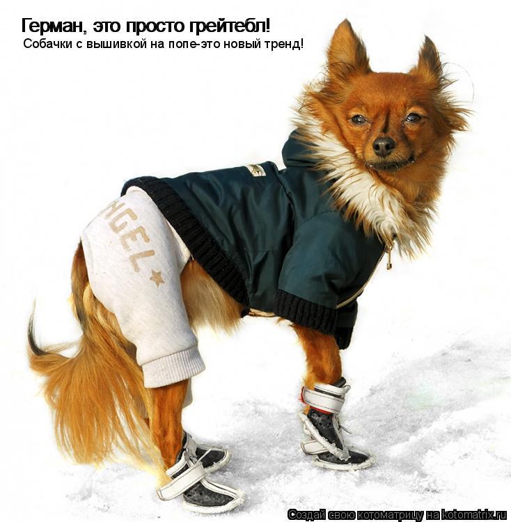 Котоматрица: Герман, это просто грейтебл! Герман, это просто грейтебл! Собачки с вышивкой на попе-это новый тренд!