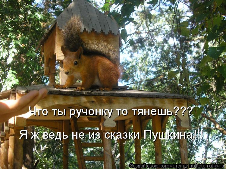 Котоматрица: Что ты ручонку то тянешь??? Я ж ведь не из сказки Пушкина!!!