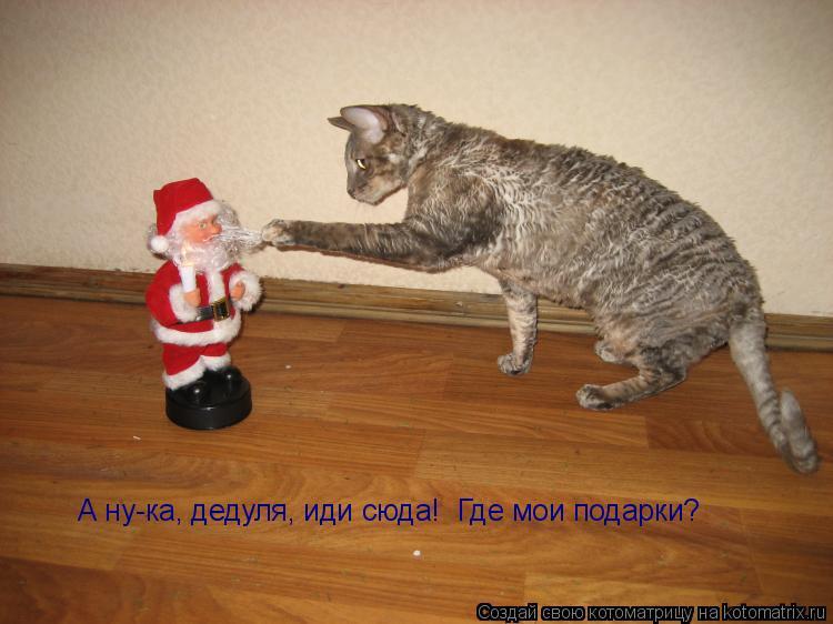 Котоматрица: А ну-ка, дедуля, иди сюда!  Где мои подарки?