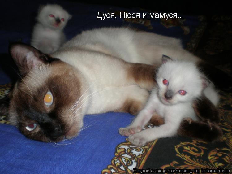 Котоматрица: Дуся, Нюся и мамуся...