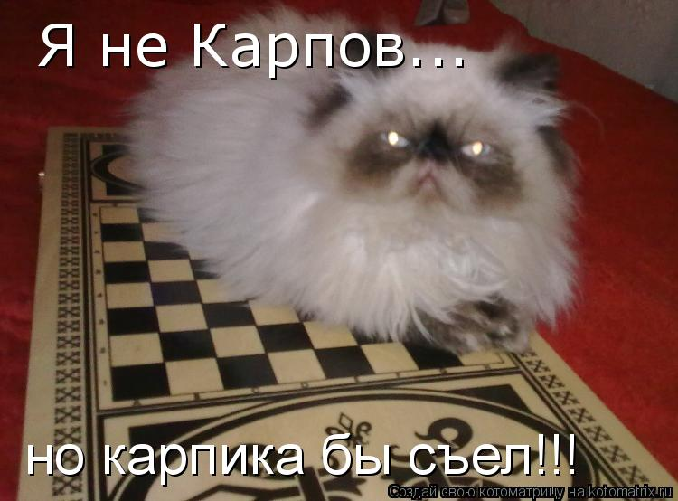 Котоматрица: Я не Карпов... но карпика бы съел!!!