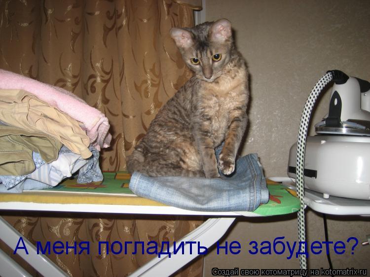 Котоматрица: А меня погладить не забудете?