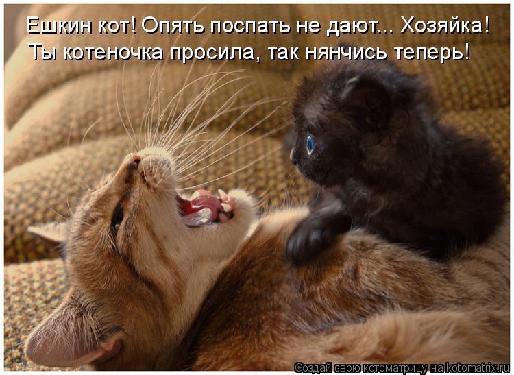Котоматрица: Ешкин кот! Опять поспать не дают... Хозяйка! Ты котеночка просила, так нянчись теперь!