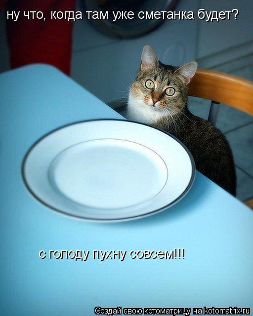 Котоматрица: с голоду пухну совсем!!! ну что, когда там уже сметанка будет?