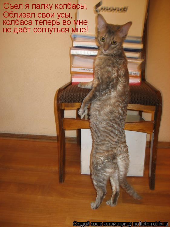 Котоматрица: Съел я палку колбасы, Облизал свои усы, колбаса теперь во мне не даёт согнуться мне!
