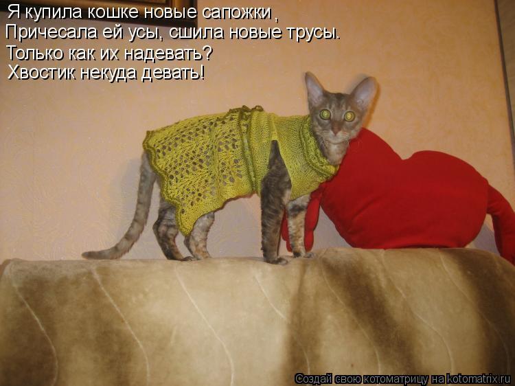 Котоматрица: Я купила кошке новые сапожки , Причесала ей усы, сшила новые трусы. Только как их надевать? Хвостик некуда девать!