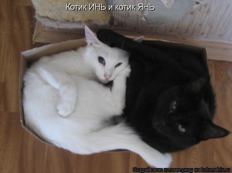 Котоматрица: Котик ИНЬ и котик ЯНЬ