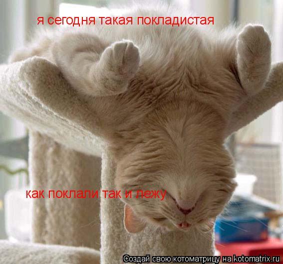 Котоматрица: я сегодня такая покладистая как поклали так и лежу