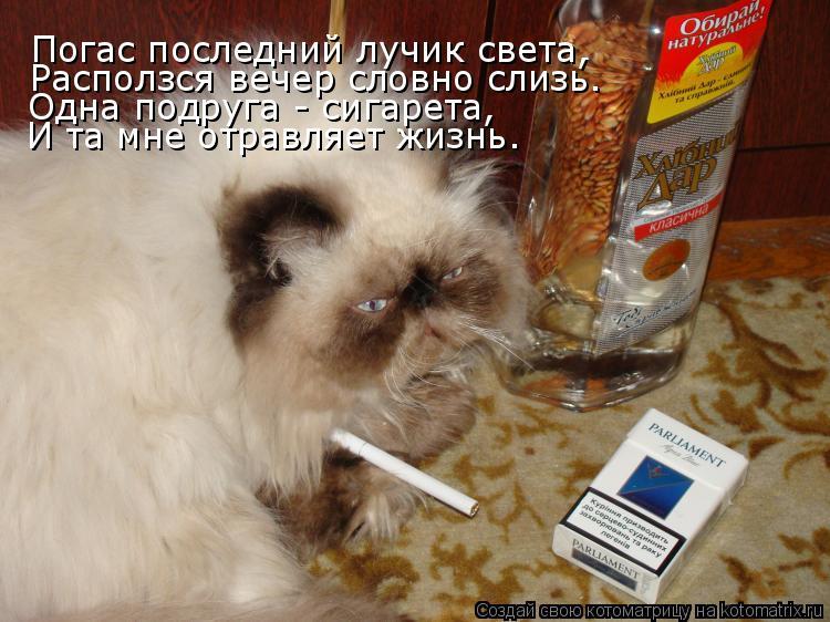 Котоматрица: Погас последний лучик света, Расползся вечер словно слизь. Одна подруга - сигарета, И та мне отравляет жизнь.