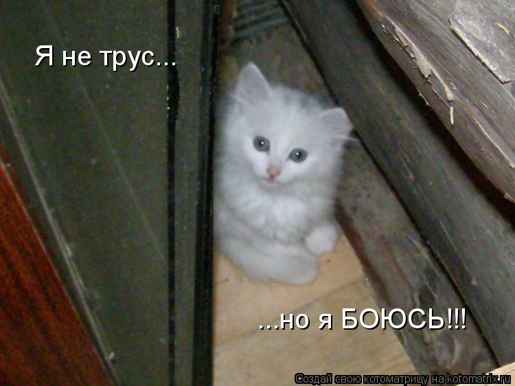 Котоматрица: Я не трус... ...но я БОЮСЬ!!!
