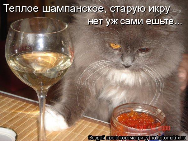 Котоматрица: Теплое шампанское, старую икру нет уж сами ешьте...