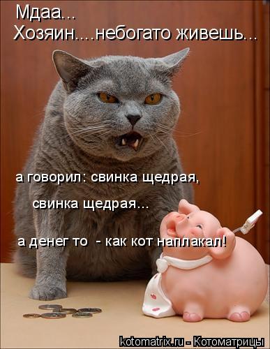 Котоматрица: Мдаа... Хозяин....небогато живешь... а говорил: свинка щедрая,  свинка щедрая... а денег то  - как кот наплакал!