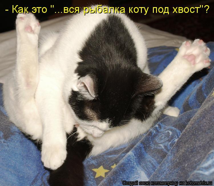 """Котоматрица: - Как это """"...вся рыбалка коту под хвост""""?"""