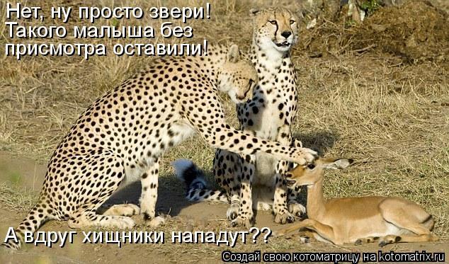 Котоматрица: Нет, ну просто звери! Такого малыша без  присмотра оставили! А вдруг хищники нападут??