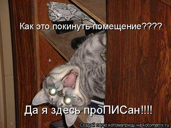 Котоматрица: Как это покинуть помещение???? Да я здесь проПИСан!!!!