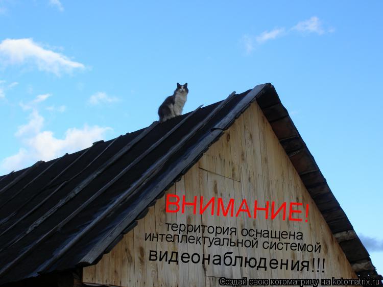 Котоматрица: ВНИМАНИЕ! территория оснащена интеллектуальной системой видеонаблюдения!!!