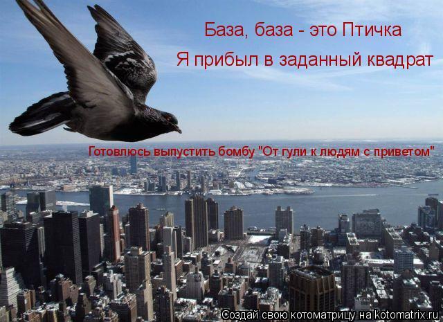 """Котоматрица: База, база - это Птичка Я прибыл в заданный квадрат Готовлюсь выпустить бомбу """"От гули к людям с приветом"""""""