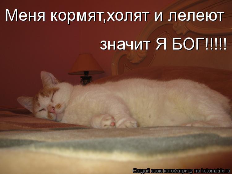 Котоматрица: Меня кормят,холят и лелеют значит Я БОГ!!!!!