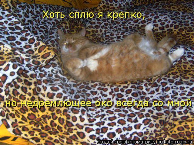 Котоматрица: Хоть сплю я крепко, но недремлющее око всегда со мной