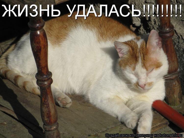 Котоматрица: ЖИЗНЬ УДАЛАСЬ!!!!!!!!!!!!!!!