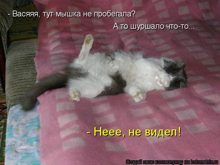 Котоматрица: - Васяяя, тут мышка не пробегала? А то шуршало что-то... - Неее, не видел!